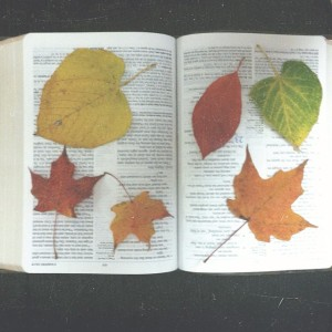 leaves bible